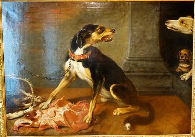 Een hond met met bezitsagressie, prooiagressie, prooi nijd of voernijd