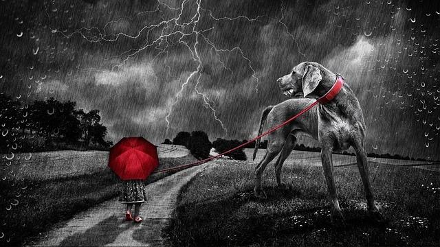 Een angstige hond zal vrijwel altijd proberen te vluchten. Weg van hetgeen waar hij bang van is. Als een angstige hond geen mogelijkheid heeft om te vluchten zal hij in de aanval gaan.