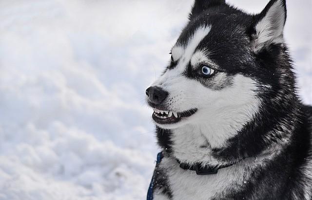 Gedragsprobleem bij de hond